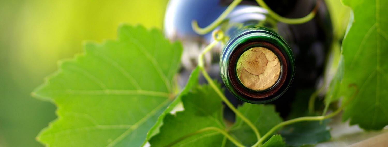 wine and distilleries